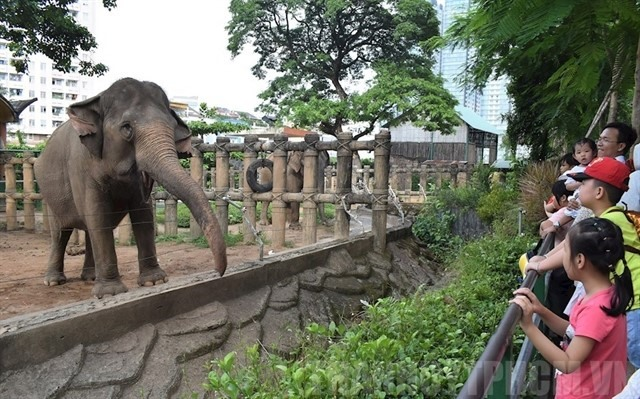Sài Gòn Zoo receives tonnes of food donations for its 1500 animals