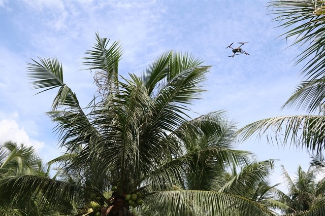 Countrys main coconut area attacked by pest that appears for first time in province
