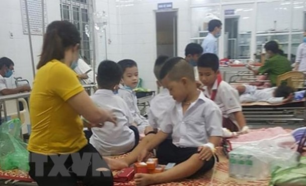 Primary students in Quảng Trị hospitalised after bee stings