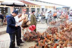 Unquarantined poultry hits markets amid bird flu risk