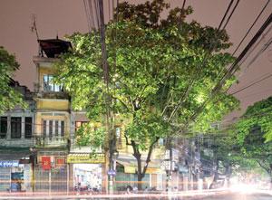 Artist captures Ha Nois elusive nocturnal beauty