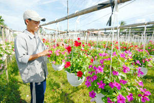 Mekong Delta flower business blooms