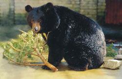 Bears escape fate worse than death