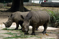Rhino horn claim 'unfounded