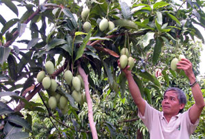 Fruit prices soar in Mekong Delta