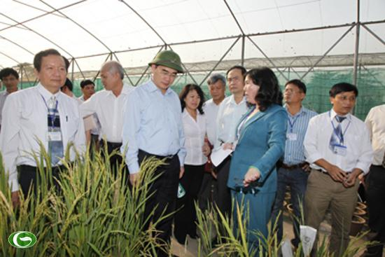 Rice research institute encouraged to innovate