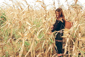 Drought destroys upland crops