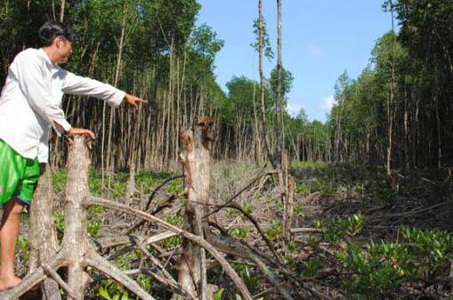 Illegal logging damages Ca Mau Park