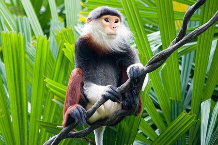 Students publish calendar of endangered primates
