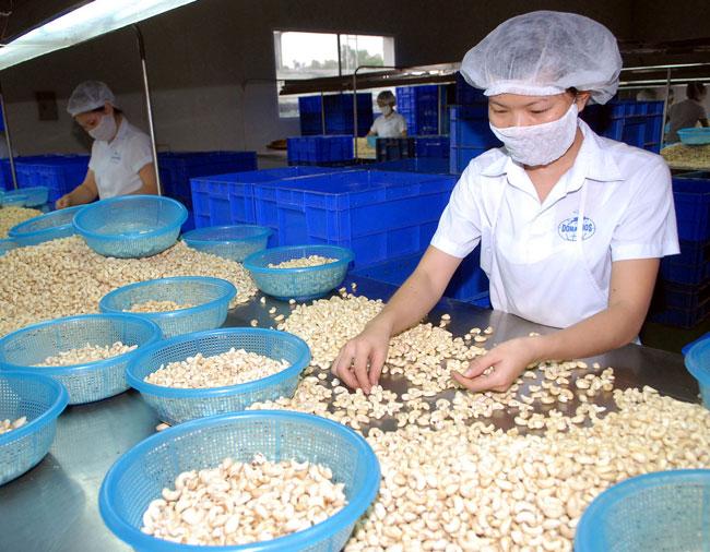 Cashew growth belies problems