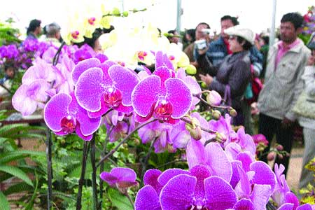 Da Lat says it with flowers once again