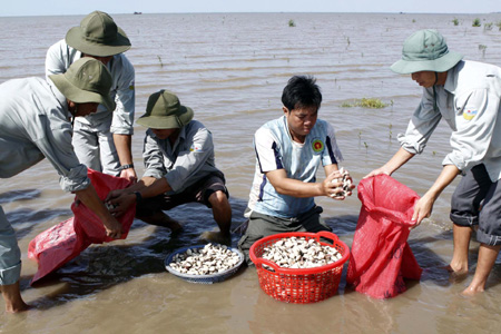 Mystery clam deaths in Delta prove costly for local farmers