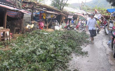 Hail storm aftermath