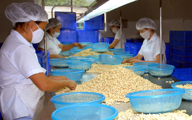 Crackdown urged on low quality cashews