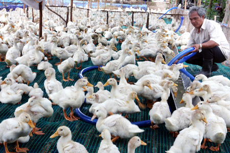 Animal feed price hike hits production