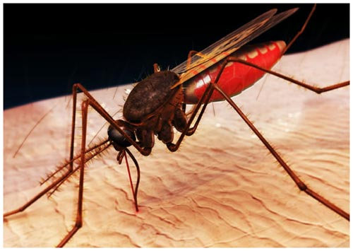 Mosquitoes released to help curb dengue