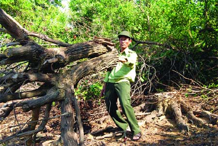 Rangers determined to protect forest