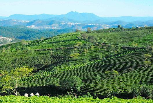 Dak Nongs future lies in hi-tech farming