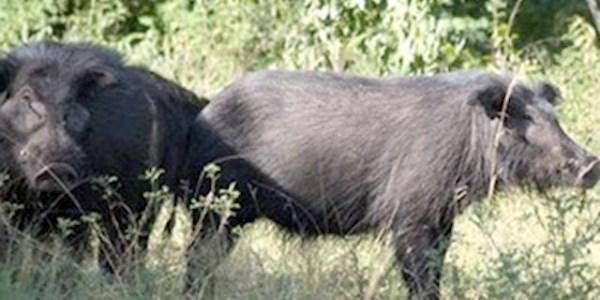 Rare wildife seen in Ca Mau forest