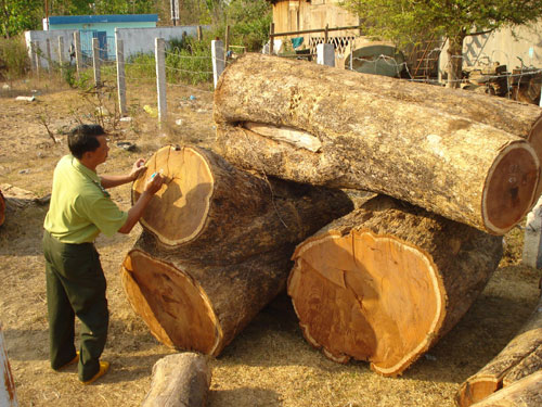 Peoples Committee imposes large fines for illegal logging
