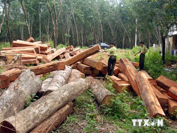 Lam Dong punishes illegal loggers