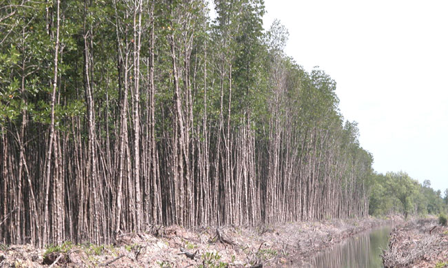 PM approves forest expansion plan