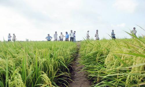 Mekong farming credit increases