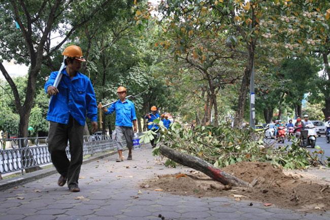 Ha Noi cuts trees in pilot beautification project