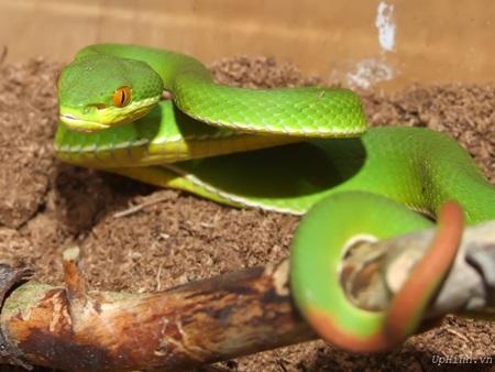 Snakes bite back