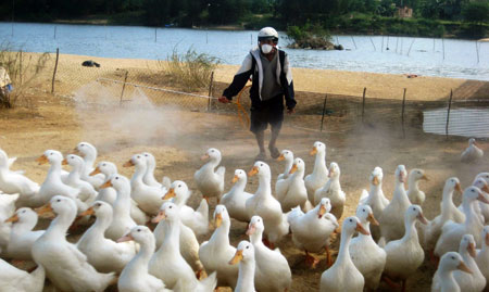 Duck farm discovers A/H5N1 infection
