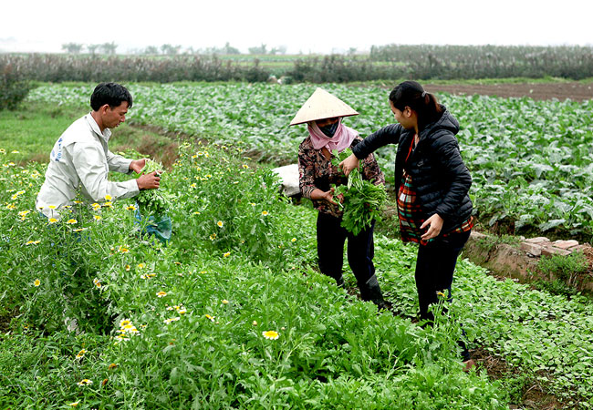 Vegetables rot as prices stay low