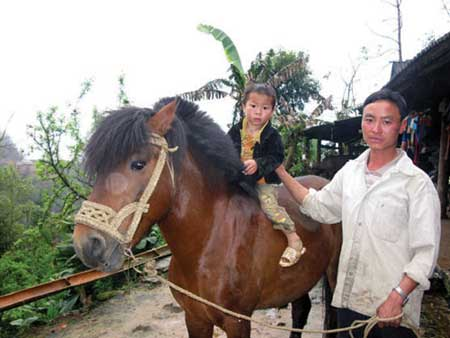 Hoofing it: Hoang Van Chu provides the region's only horse-drawn carriage service.
