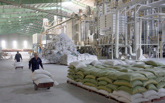 Farmers suffer as rice remains unsold