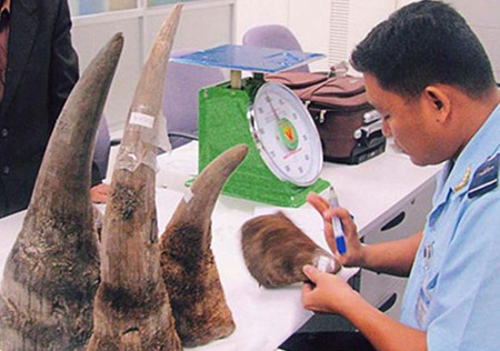 An official checks rhino horns seized in a smuggling case. Traditional medicine practitioners can help save rhinos by emphasising that rhino horn cannot cure cancer while offering alternative remedies.