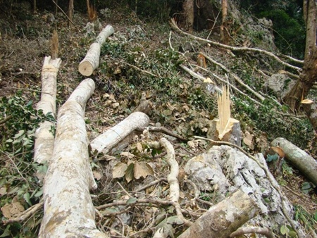 In Tin Toc Village, about 160 hectares of protective forest has been destroyed for cultivation by 61 households.