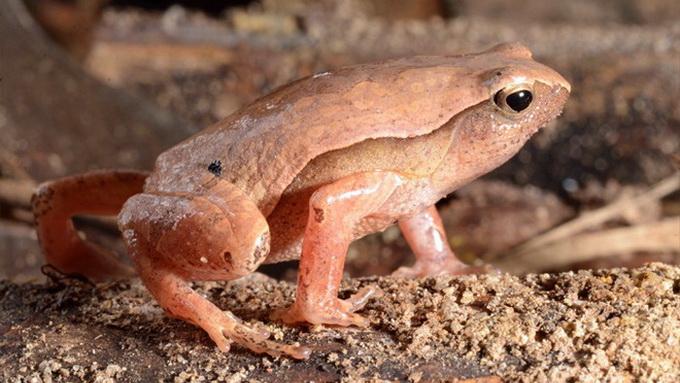 New flora amphibian species found in Khanh Hoa