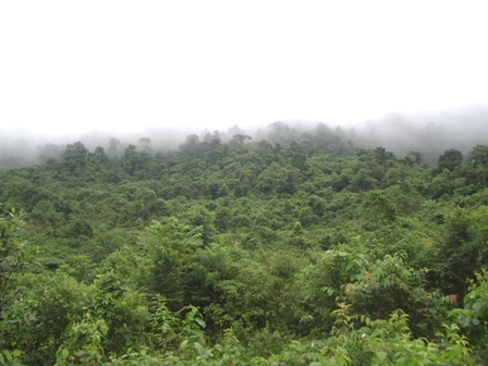 Forestry firms get intl nod