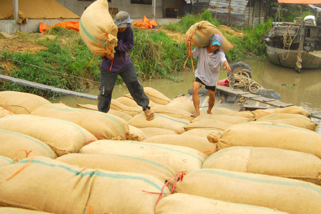 Mekong rice sector in need of restructuring