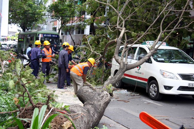 City requested to set up fund for victims of tree accidents