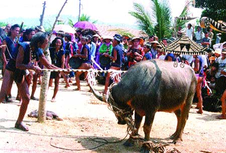 'Mercy' killing: The buffalo sacrifice is an important ceremony for ethnic minorities in Tay Nguyen (the Central Highlands). Villagers ask for the buffalo's mercy and request it to accept their decision before it is killed and its meat shared.
