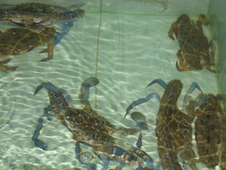 To protect the crabs, the Department of Agriculture and Rural Development in Kien Giang Province – home to Phu Quoc — set up the bank in 2011.