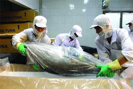 Tuna industry tackles quality issues