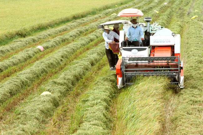 Mekong farmers cash in on fragrant rice