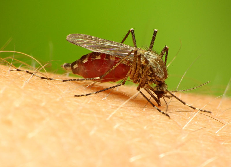 Drug-resistant malaria a growing threat