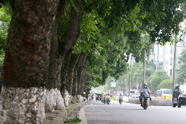 Perennial trees to make way for new metro line