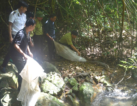 Animals released into wild in Quang Ninh