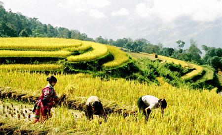 Autumn takes shape in northern Viet Nam
