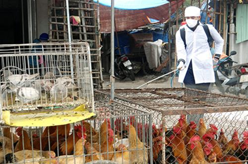 Lai Chau prepares measures against A/H5N6 transmission