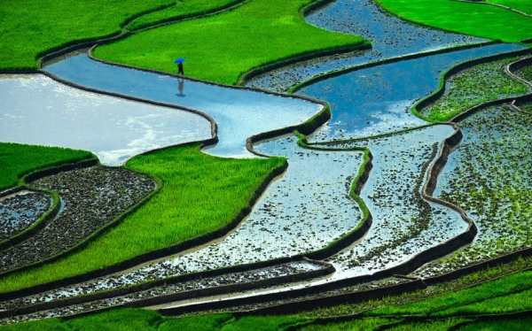 Viet Nams rice terraces among worlds 'most surreal landscapes