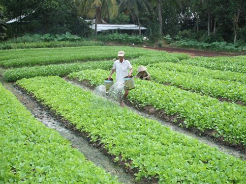 VN agriculture to benefit from free trade